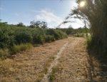 a passeggio dentro la riserva dell'Appia Antica